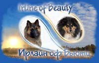IRLINE OF BEAUTY - kennel of collies and tervurens, Russia, Samara